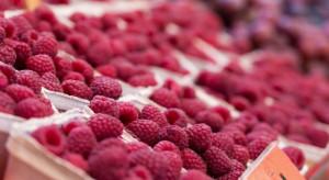 Ceny malin w hurcie wahają się między 10-20 zł/kg
