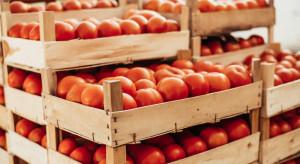 Wysokie ceny pomidorów. Rośnie eksport do Hiszpanii i Ukrainy (analiza)