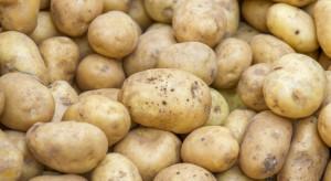 MRiRW chce ziemniaków z graficznym odwzorowaniem flagi państwa pochodzenia