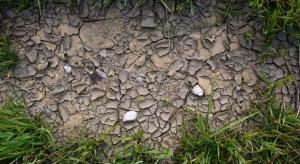 Podlaskie: W 101 gminach komisje szacują straty w uprawach na skutek suszy