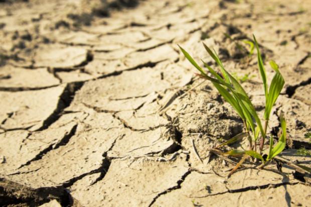 Lubelskie: Najgorsze skutki suszy - na północy województwa
