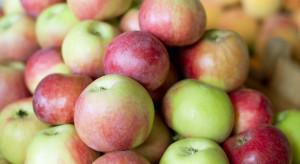 Kolejne letnie odmiany jabłek dostępne na rynku hurtowym w Broniszach