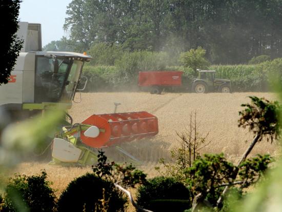 Wypadki w rolnictwie zdarzają się częściej niż w innych działach gospodarki