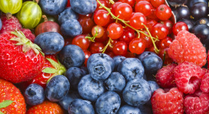 Integracja plantatorów owoców jagodowych ułatwia edukację konsumentów (wideo)