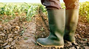 CIR: Blisko 1,9 mld zł strat w rolnictwie spowodowanych suszą