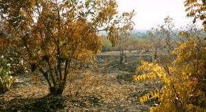 W lasach rośnie ryzyko pożarowe (wideo)