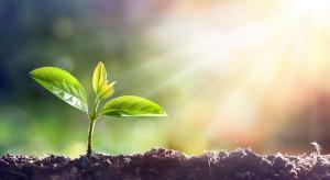 2020 rok będzie Międzynarodowym Rokiem Zdrowia Roślin