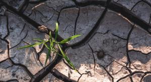 Susza 2019: Na straty trzeba spisać nawet 1/3 upraw