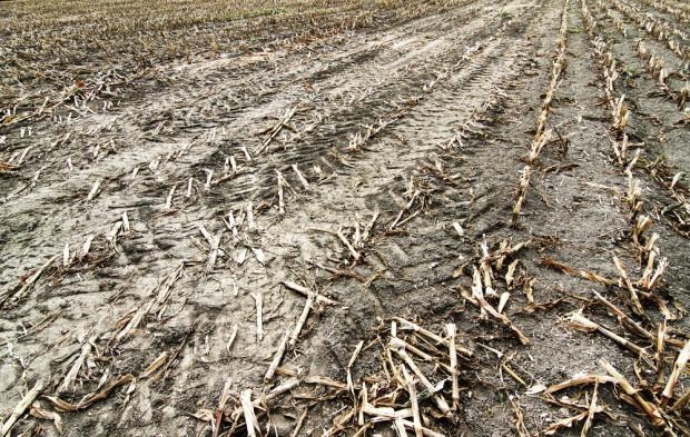 W 54 gminach woj. pomorskiego powołano komisje ds. szacowania strat w rolnictwie