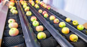 Unia Owocowa: Ten rok pokaże, że nie da się jabłek sortować w stodole i byle jak (wideo)