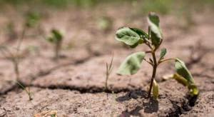 Podkarpackie: Około 500 gospodarstw dotkniętych suszą. Trwa szacowanie start