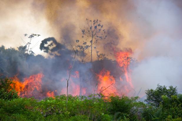 Brazylia: W związku z pożarami wprowadzono zakaz wypalania gruntów