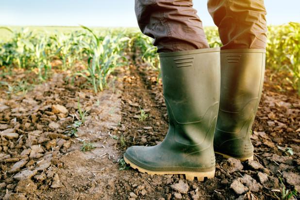 W 68 gminach woj. pomorskiego powołano komisje ds. szacowania strat w rolnictwie