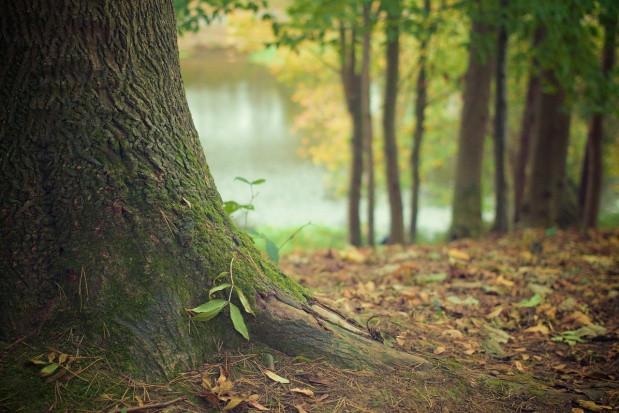 PAN: za kilkadziesiąt lat z polskich lasów może zniknąć 75 proc. drzew