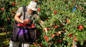 Spada liczba Polaków deklarujących chęć pracy za granicą