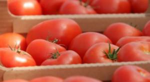 Wysokie ceny skupu warzyw do przetwórstwa