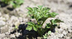 Nowy herbicyd do zwalczania chwastów od CIECH Sarzyna