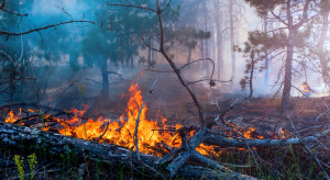 Galicja: Ponad 3 tys. strażaków walczy z pożarami lasów i pól uprawnych