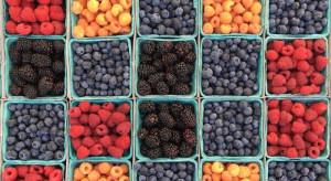Polscy producenci jagodowych są w stanie produkować od maja do końca października (wideo)