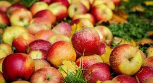 Sektor owoców wymaga politycznego wsparcia i zmian prawnych