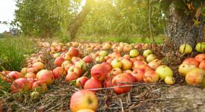 Mołdawscy producenci niezadowoleni z cen jabłka przemysłowego