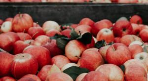 Mniej jabłek – większe szanse na wyższe ceny?