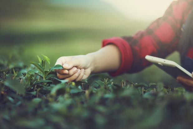 Aplikacja Vademecum środków ochrony roślin coraz bardziej popularna
