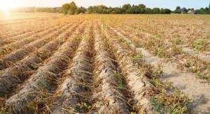 IUNG: zmniejsza się zasięg występowania suszy
