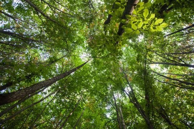 Dania: Zebrano 2,4 mln euro na posadzenie miliona drzew