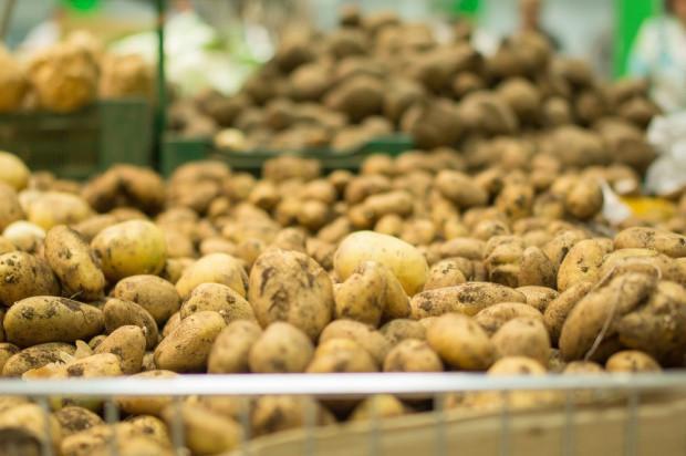 Białoruś zamierza zarobić 50 mln dolarów na eksporcie ziemniaków w 2019 roku