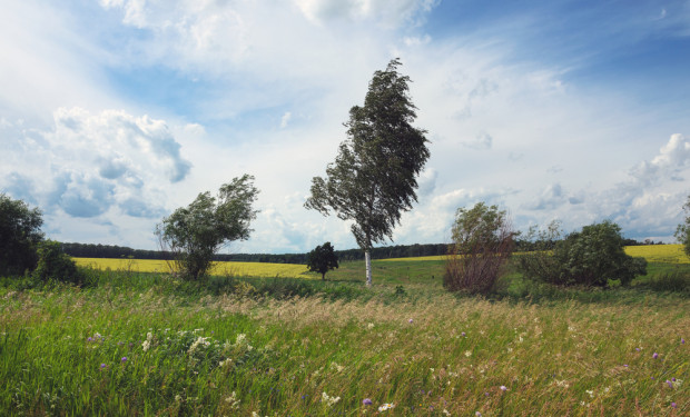 IMGW ostrzega: silny wiatr na południu i wschodzie Polski