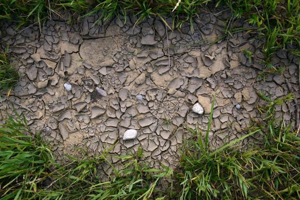 W Pomorskiem susza dotknęła ok. 58,3 tys. hektarów upraw rolnych
