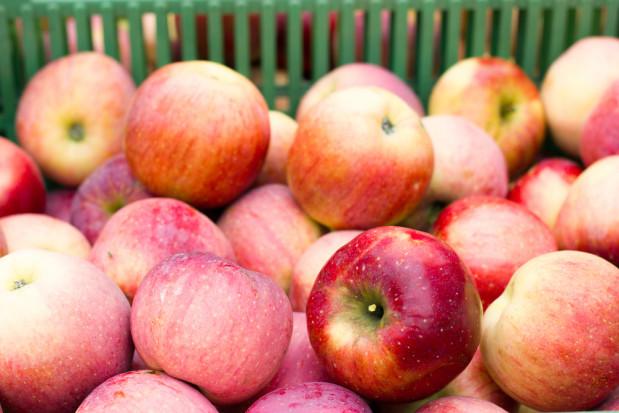Wkrótce rozpocznie się eksport polskich jabłek na tajwański rynek