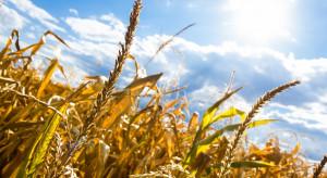 Pomoc dla gospodarstw rolnych poszkodowanych przez anomalie pogodowe