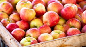 Bronisze: tanieją jabłka odmian zimowych, drożeją - odmiany letnie