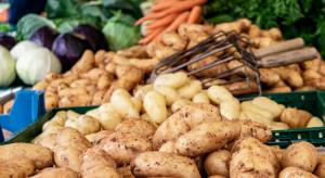 Bronisze: Podaż ziemniaków z importu 'wymusiła' obniżkę cen krajowego ziemniaka