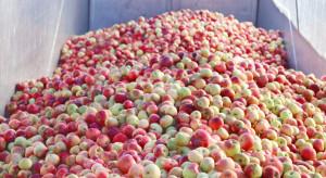 CBA rozpoczęło kontrolę ws. interwencyjnego skupu jabłek