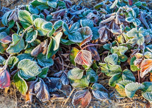 Startuje jesienny sezon sprzedaży ubezpieczeń uprawowych z dopłatami