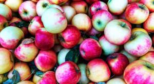 Rynek Tajlandii został otwarty na polskie jabłka ze zbiorów 2019