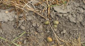 IUNG: susza rolnicza w ośmiu województwach