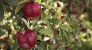 GUS: Zbiory owoców z drzew ok. 25% mniejsze od ubiegłorocznych