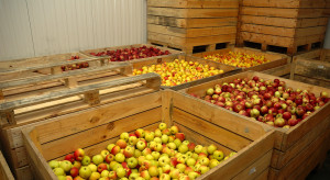Innvigo nawiązało partnerstwo z firmą z segmentu środków post-harvest