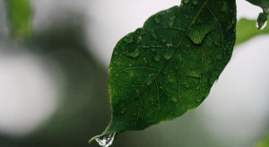 IMGW ostrzega: intensywne opady deszczu w czterech województwach