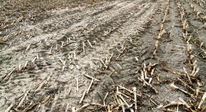 Zamiast dopłat do ubezpieczeń – dopłata do hektara po suszy