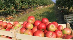 Węgry: tegoroczna produkcja jabłek będzie o połowę niższa niż przed rokiem