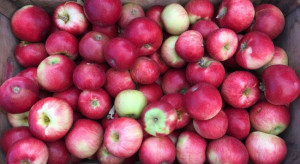Bronisze: Wysokie ceny jabłek; mniejsza podaż malin i borówek