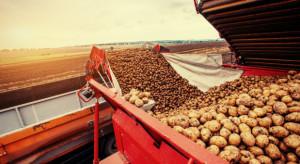 IERiGŻ: Zbiory ziemniaków w tym roku mogą być o 11 proc. niższe