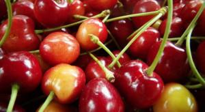 USDA: Zmniejszy się światowa produkcja czereśni
