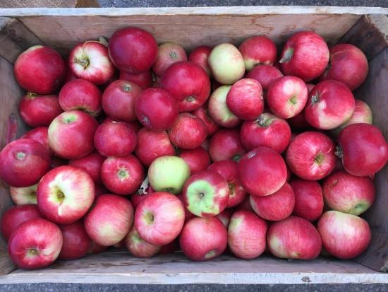 Ceny jabłek są dużo wyższe niż rok temu?