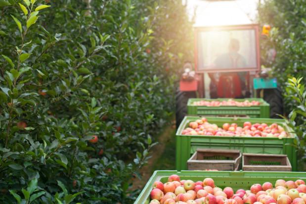Pracownicy z Ukrainy nadal mocno poszukiwani w pracy w rolnictwie i ogrodnictwie